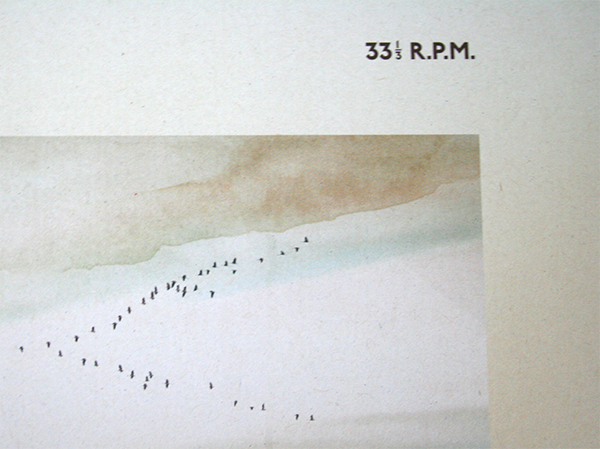 kraniche-33